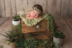 Newborn girl photo shoot with succulents Baby Zimmer, Bassinet, Bed, Furniture, Home Decor, Girl Photos, Newborns, Homemade Home Decor, Crib