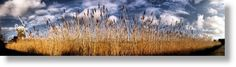 ziggiLarsson - Panoramic Landscape Artist - England - Norfolk - Cley-next-the-Sea