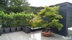 Ahorn Bonsai auf einer Dachterrasse Klagenfurt, Terrazzo, Bonsai, Patio, Outdoor Decor, Plants, Home Decor, Roof Terraces, Water Pond