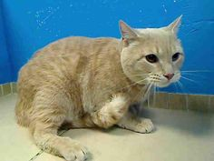 **SUPER URGENT**JEAN A NEUTERED MALE 3 YRS OLD WILL BE KILLED MORNING / WEDNESDAY / FEB 6, 2013**PLEASE HELP SAVE HIM    For more information on adopting please read the following:https://www.facebook.com/PetsOnDeathRow/app_396393053713168?ref=ts  THANK YOU, DANA