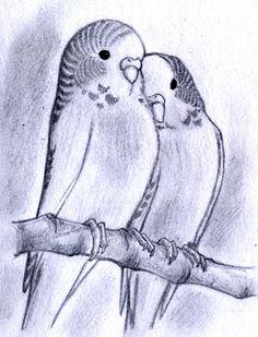 Budgies sketch by MondoArt on DeviantArt - Budgies sketch by MondoArt - Bird Drawings, Pencil Art Drawings, Easy Drawings, Animal Drawings, Drawing Sketches, Bird Pencil Drawing, Drawing Birds, Parrot Drawing, Bird Sketch