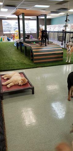 Dog Boarding Kennels, Pet Boarding, Animal Boarding, Dog Rescue Shelters, Indoor Dog Park, Canis, Daycare Design, Dog Grooming Salons, Dog Cafe
