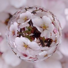 桜をビー玉に閉じ込めました
