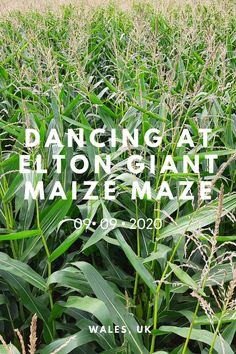 footSTEPS is a blog that follows Gemma, a professional dancer, as she creates short dance films on her travels around the world. In the opening film of footSTEPS Season 2, I dance my way through a giant maize maze in the shape of Star Wars' R2-D2 in the Gloucestershire countryside.