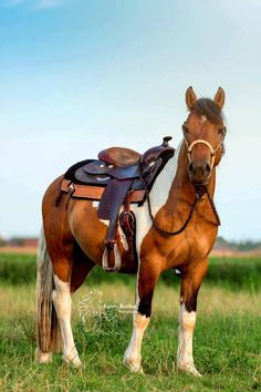 Kicked in the Head: The Equestrian Helmet All The Pretty Horses, Beautiful Horses, Animals Beautiful, Cute Animals, Beautiful Creatures, Horse Love, Horse Girl, Country Critters, Horse Riding Clothes