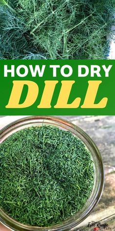 Do you have a garden full of dill? Learn how to dry dill so you can enjoy that great dill taste in dishes and meals all year long! Dill is an easy herb to preserve and great to use in any dish you would use fresh dill! Dill Recipes, Herb Recipes, Canning Recipes, Punch Recipes, Salad Recipes, Preserve Fresh Herbs, Spices And Herbs, Fresh Dill, Gardens