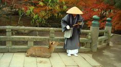 A deer and monk in a park in Nara, Japan. Thousands of deer live and roam free in the streets and parks of the city. According to legend, Japanese god Takemikazuchi rode to Nara on a white deer to protect the city, and are considered holy. The image of Nara's famous deer are everywhere -- including the manhole covers!