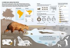 El chigüire es una especie de amplio rango cuyos requisitos de conservación incluyen los de muchas otras especies animales y vegetales