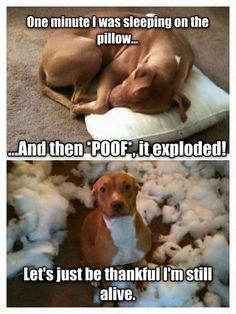Really funny dog memes Animal Humour, Funny Animal Jokes, Crazy Funny Memes, Really Funny Memes, Funny Animal Videos, Cute Funny Animals, Stupid Funny Memes, Cute Baby Animals, Funny Dogs