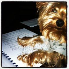 dogs study too