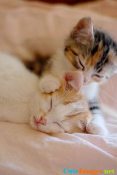 To cute kittens Kittens And Puppies, Cute Cats And Kittens, I Love Cats, Crazy Cats, Kittens Cutest, Fluffy Kittens, Pretty Cats, Beautiful Cats, Animals Beautiful
