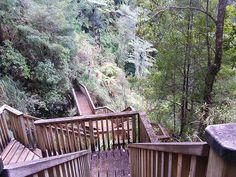 Fairy Falls, Waitakere Ranges #Auckland