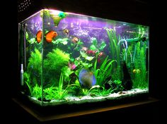 Planning to buy a Fish tank aquarium ,How to choose right size ? ~ Home Decors