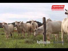 Oxen Currais - Cerca Elétrica Speedrite - Balanças Tru Test - Curral Oxen