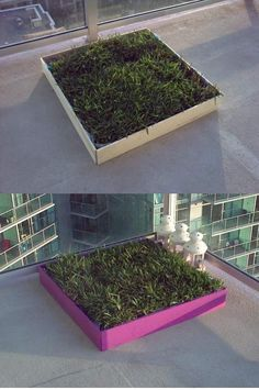 I wonder if marshall would be ok with this.DIY dog potty patch with REAL grass! Great for an apartment patio! Make the frame taller so it wont be as messy either :) perfect for those late nights you dont want to have to walk the dog out so far to potty. Porch Potty, Dog Litter Box, Dog Backyard, Dog Spaces, Dog Yard, Dog Potty, Cool Apartments, Apartment Balconies, Dog Houses