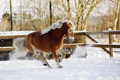 Haflinger in Snow II by Colourize.deviantart.com on @deviantART