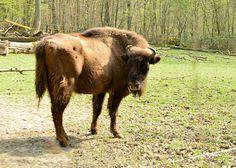 Wiesbadenaktuell: Natur erleben in der Fasanerie Wiesbaden