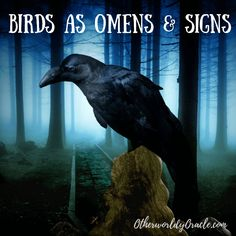 Wondering about birds as omens & signs? Do owls bring death? Is there a bird of ill omen? Learn how to interpret birds as messengers here. Wiccan Witch, Magick Spells, Crow Meaning, Nature Symbols, White Pigeon, Witchcraft For Beginners, Thing 1, Spirit Guides, Animals Of The World