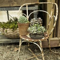 #Succulents #garden #rustic #grow #droughttolerant #plants #growyourown #gardening