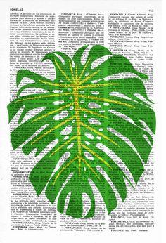Wall art Botanical studio. Monstera leaf illustration by PRRINT