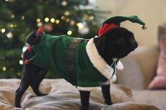 Nalas Christmas Photoshoot