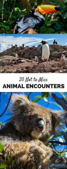 Looking to add some animal encounters to your travel bucket list? Here are 20 Not to be Missed Animal Encounters From Around the World | The Planet D Adventure Travel Blog