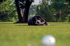 Pet-friendly Club - Golf Club Udine Italy