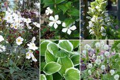 10 plantes vivaces d'ombre pour composer un massif - Promesse de Fleurs Geranium Vivace, Vegetables, Ps, Flowers, Plants, Menu, Spirit, Gardening, Inspiration
