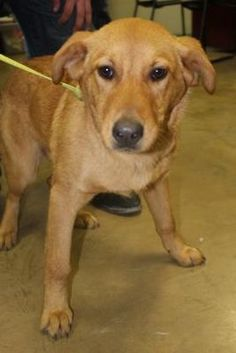 Pictures of 37602540 a Australian Cattle Dog for adoption in Cleveland, AL who needs a loving home.