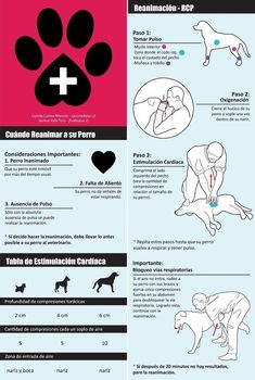 Here are some helpful First Aid tips for Dogs. Your help . - Here are some helpful First Aid tips for Dogs. Your help can save a life! Dog Care Tips, Pet Care, Pet Dogs, Dog Cat, Animals And Pets, Cute Animals, Diy Stuffed Animals, Pet Health, Pet Accessories