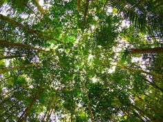 Google Image Result for http://media.treehugger.com/assets/images/2011/10/20100604-amazon-forest-canopy.jpg