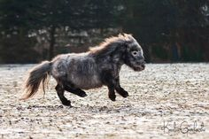 - Art Of Equitation Funny Animal Memes, Funny Animal Pictures, Funny Animals, Animal Pics, Welsh Pony, Tiny Horses, Show Horses, Majestic Horse, Beautiful Horses
