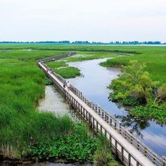 Point Pelee: This Floating Boardwalk In Ontario Is The Most Beautiful Place For A Spring Hike - Narcity Ottawa, Quebec, Places To Travel, Places To See, Travel Destinations, Ontario Travel, Canadian Travel, Secret Places, New Travel