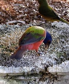 Pretty Birds, Beautiful Birds, Beautiful Pictures, All Birds, Little Birds, Vogel Gif, Animals And Pets, Cute Animals, Painted Bunting