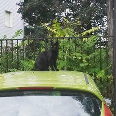 #gatto #occhiVerdi #verde