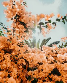 Find and save flowers for all occasions on We Heart It. Collect beautiful images of florals in all forms all year long. Nature Aesthetic, Flower Aesthetic, Pink Aesthetic, Wild Flowers, Beautiful Flowers, Bouquet Flowers, Yellow Flowers, Image Deco, Photo Wall Collage
