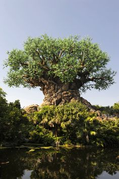 The largest of the 4 theme parks at Walt Disney World Resort, Disney's Animal Kingdom park is filled with attractions, adventures and entertainment.