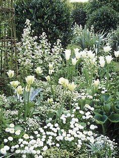 Beautiful white flower garden combination