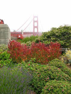 Flower garden at the Golden Gate Bridge; San Fransisco, CA