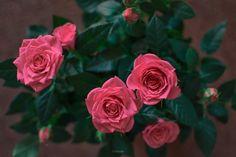 Some pink mood - for V day