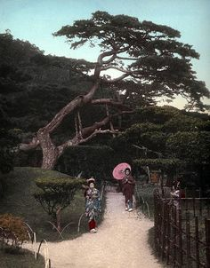 THREE GIRLS UNDER A TWISTED PINE --  Another Lovely Sight in Old Lotus-Land Japan by Okinawa Soba, via Flickr. 1890s Hand-colored Salt Print.
