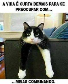 """16.3 mil curtidas, 311 comentários - Eu Amo Gatos (@euamogatoss) no Instagram: """""""""""