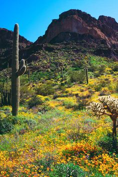 Places To Travel, Places To Visit, Landscape Photography, Travel Photography, Solo Travel, Usa Travel, Sonora Desert, Easy Jet, Seasonal Image