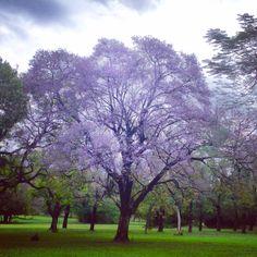 Tarumá.jardin botánico. Asunción-Paraguay