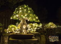 Garden Of Lights, Treasure Coast, Saturday Night, Holidays And Events, Fountain, Gate, Friday, Outdoor Decor, Shop