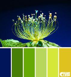 Color Palette, wild flower, green, blue.