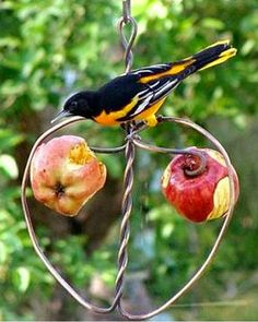 Fruit holder for the birds..... grab some wire and start twisting!