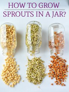 How to make Sprouts.Growing Mung Bean Sprouts, How To Sprout Beans or Moong/Mung at home, How To Make Moong Bean Sprouts growing at home How to make Sprouts in a jar, Make sprouts in canning jar,Sprouting seeds Bean Sprout Salad, Bean Sprout Recipes, Sprouts Salad, Bean Recipes, Sprouts Recipe, How To Make Sprouts, How To Make Beans, How To Sprout Seeds, Bean Sprouts Growing