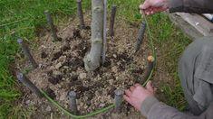 Ha már nagyon nincs semmi fontos teendőnk a kertünkben, és van facsemeténk, amit most ültettünk, készíthetünk neki kerítést vesszőből. Igazá...