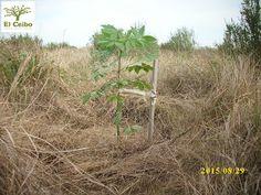 Reserva Natural El Ceibo: Festejando el día del árbol....plantamos nativas (...